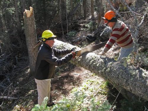 Cutting a Broken Cork Bark