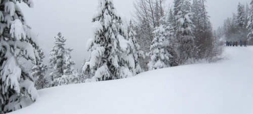 Betty Bear Snowfall